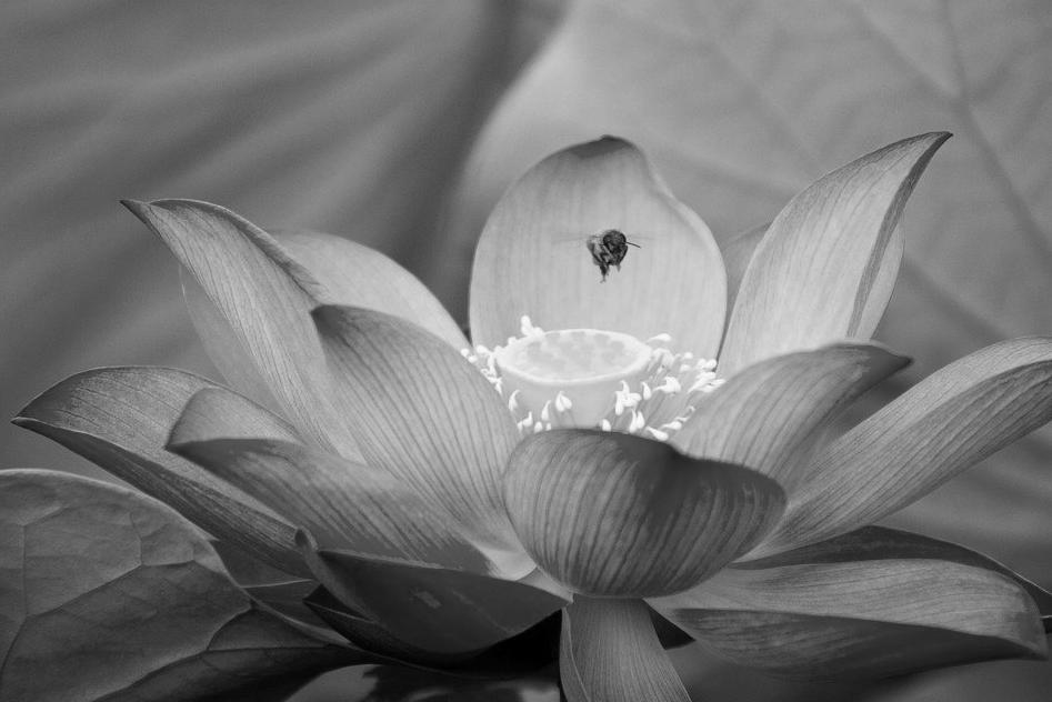 Renovation piscine Hautes-alpes 05